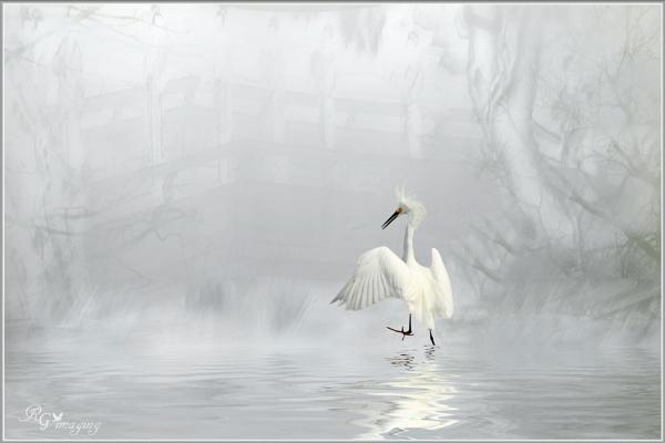 Egret fantasy by rgg