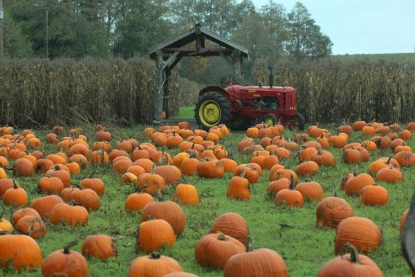 PumpkinVille by tonyguitar