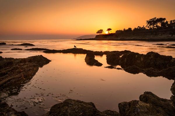 Seagull Sunset by Trevhas