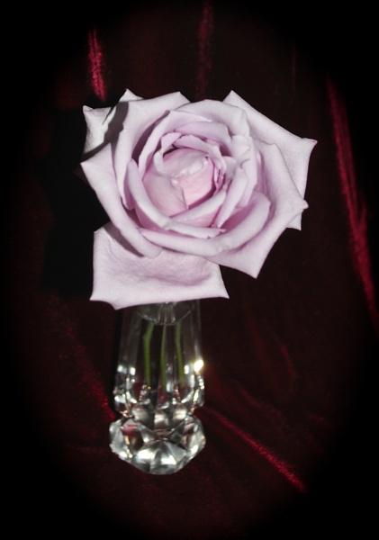 Lilac by kl0verleaf