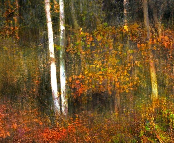 Autumn colour by whatriveristhis