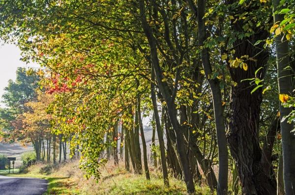Autumn Wak by Gillken