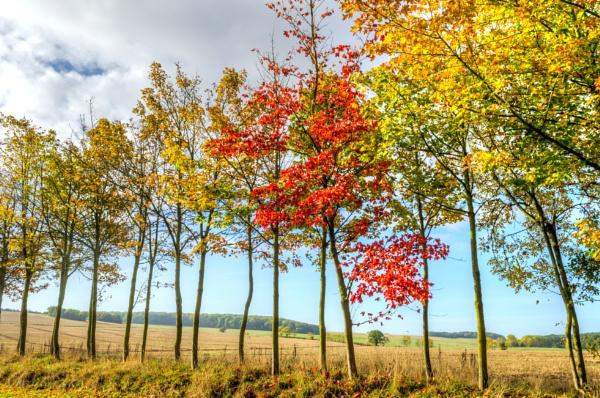 Colours of Autumn by Gillken