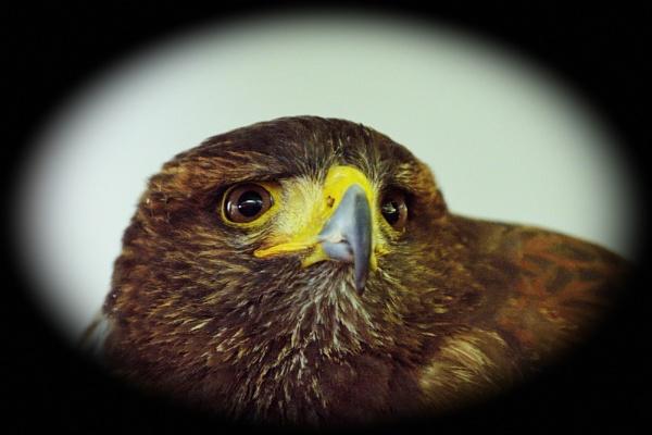 eagle eye by mogobiker