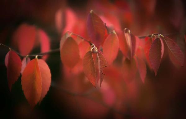 blush by AlanRangerPhotography