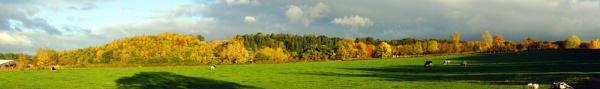 Autumn view by BillRookery