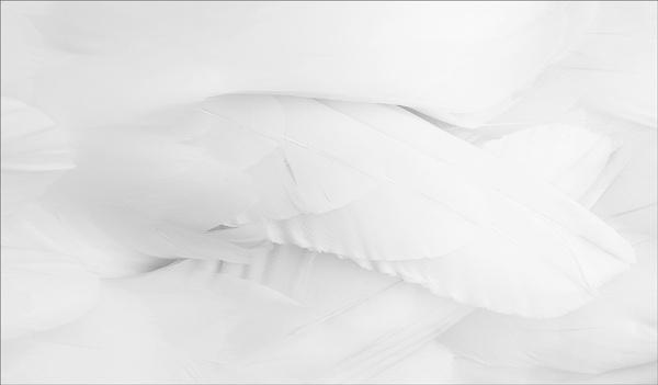 Folds by sherlob