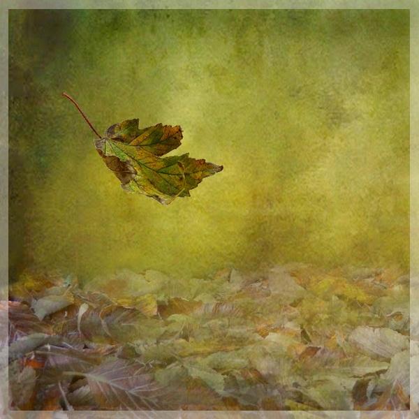 The Fall by BarbaraR