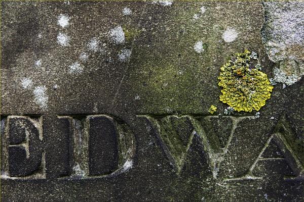 EDWA by woolybill1