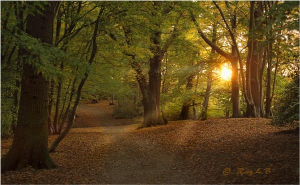 Autumn stroll by RLB