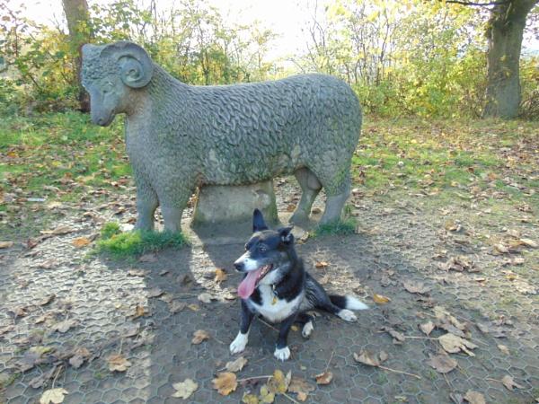 wooly by alixzan