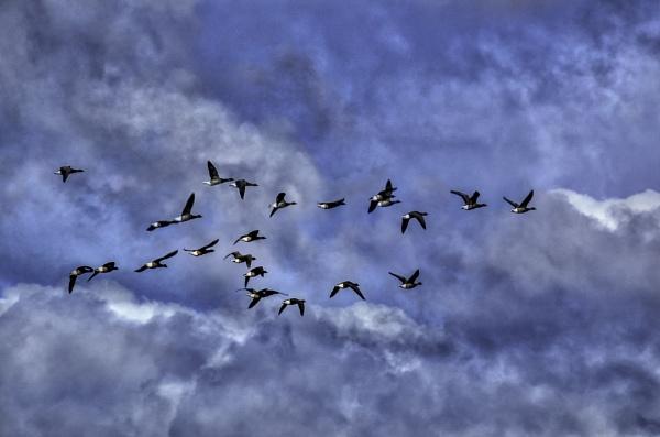 Flocks by RLF