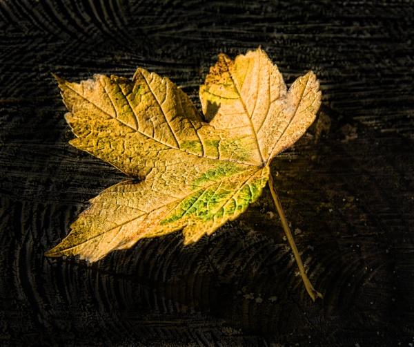 Leaf on Bark by Irishkate