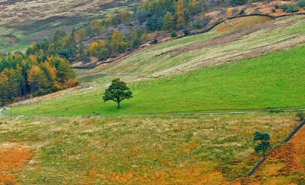 A Tree by AdrianP