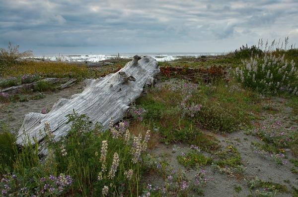Driftwood by genebalun
