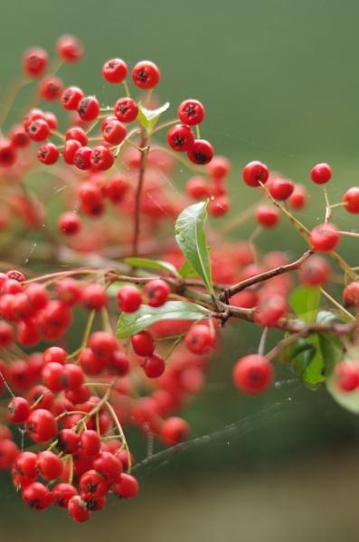 Berries by paulb2433