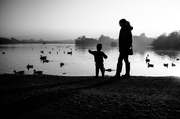 feeding ducks by psjekel