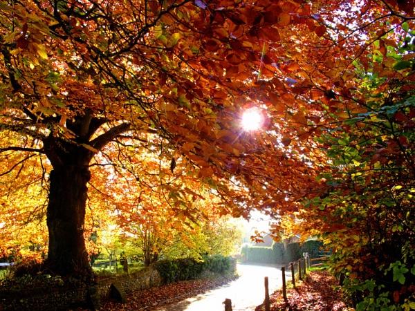 beach tree in autumn.