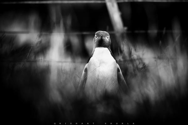 Penguin Conspiracy by nishant101