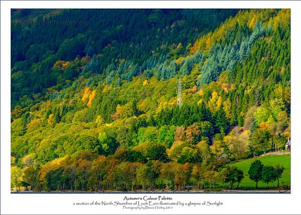 Autumn\'s Colour Palette by MunroWalker