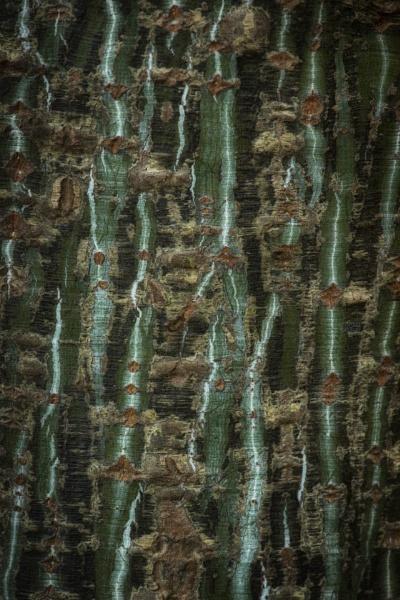 bark study 18 by AlanRangerPhotography