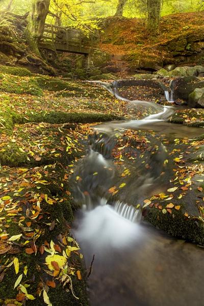 The Autumn Carpet by Alan_Coles