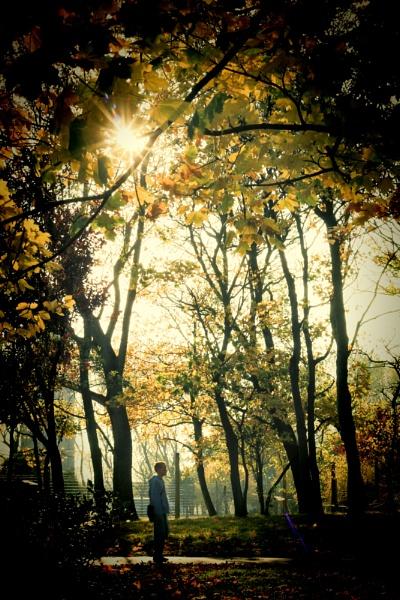 Autumn wonder as I wander by jonlonbla