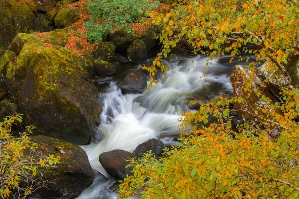 Autumn Splendour by Brenty