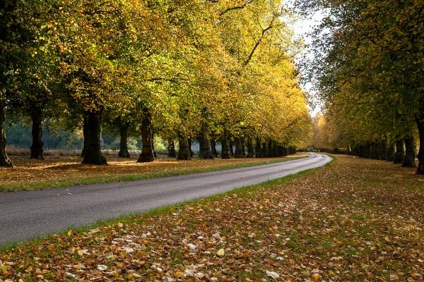Limetree Avenue by Steve-T