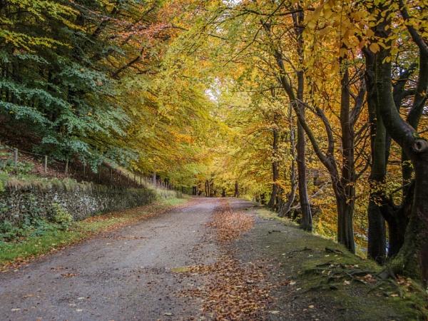 Autumn at Ladybower Reservoir by ptdigital