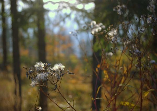 autumn by Adam_photos