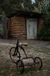 Can chooks ride trikes?