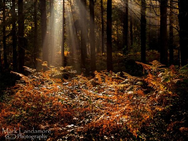 I\'ve seen the light. by mlanda