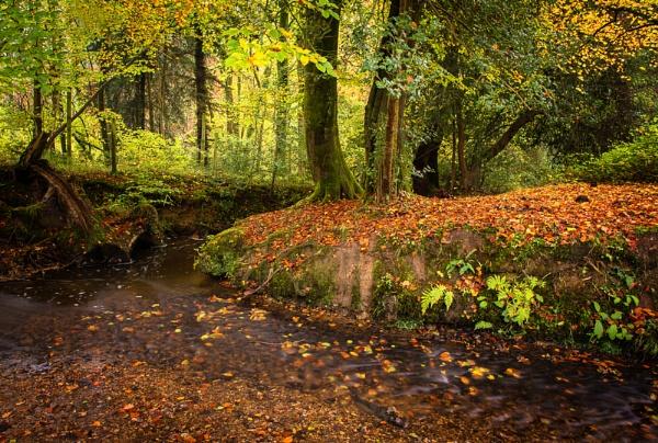 New Forest Stream by jasonrwl
