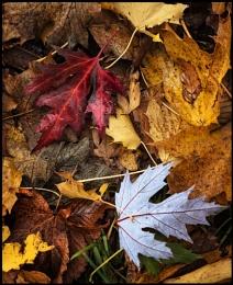 Autumns Palette.