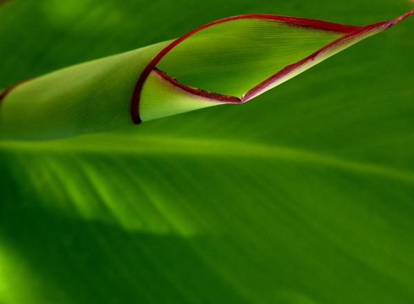 "\""Verde - green\"" by Chinga"