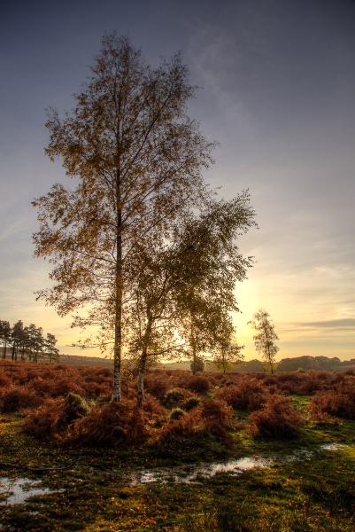 Autumn Walk on Ashley Range by TimJ