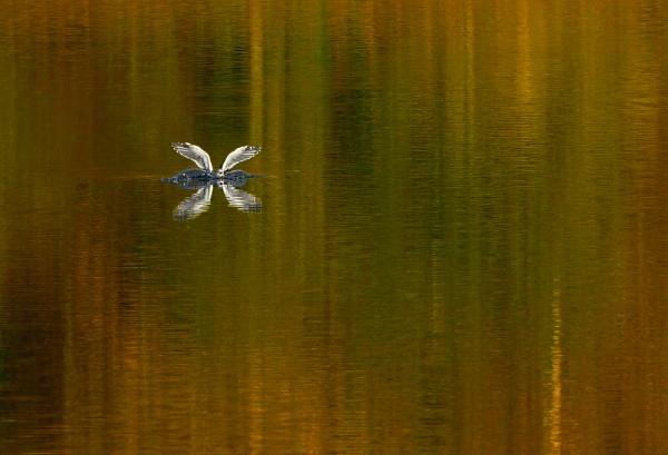 splash by senn
