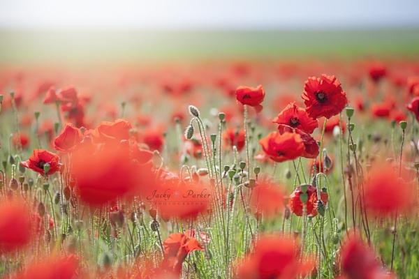 Remembrance by jackyp