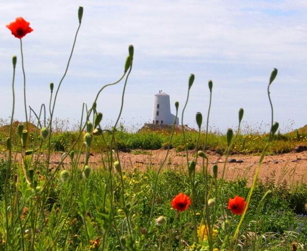 Llanddwyn poppys by pks