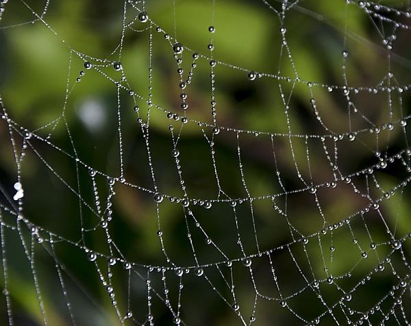 Spider magic by Alda