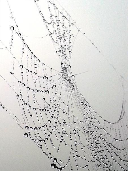 Spider magic 2 by Alda