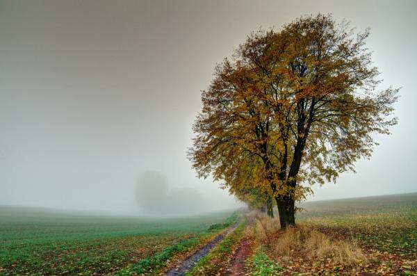 Tree... by Oxygenum