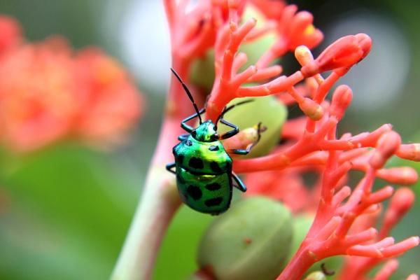 Shining Bug!!! by rajibcee1