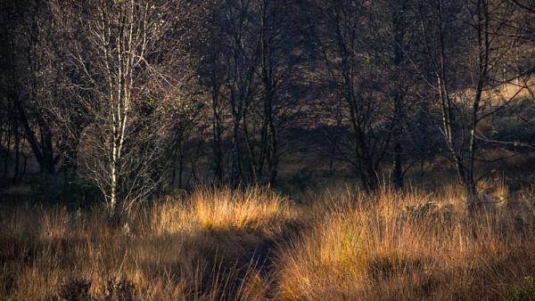 Autumnal by gerainte1