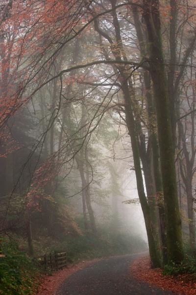 Vyrnwy Fog by AlanRangerPhotography