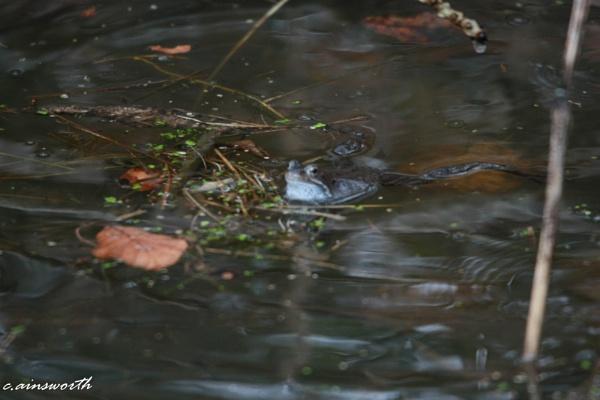 swiming in the rain by chainshot