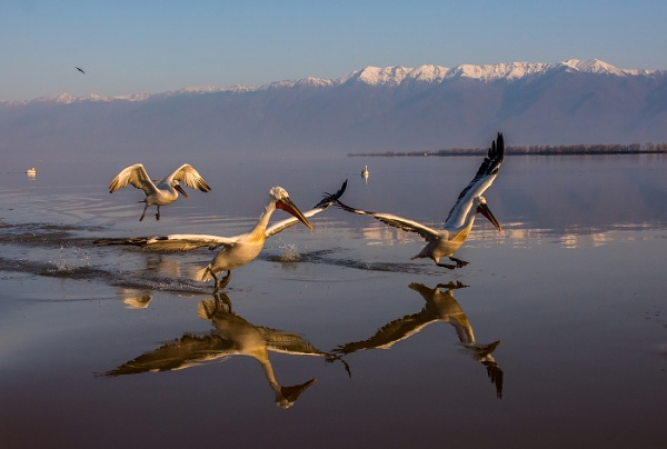 The pelican run by Photoseeker