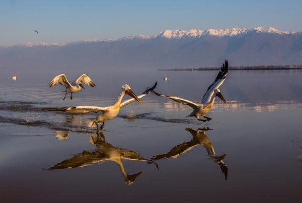 The pelican run by Photoseeker