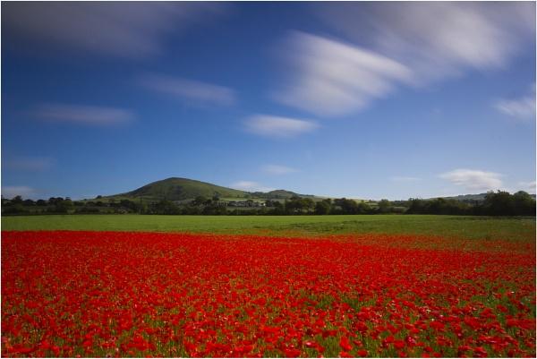 Poppy Field by RoBow